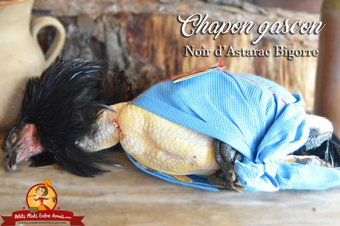 chapon-noir-dastarac-bigorre